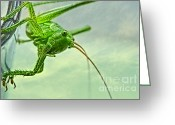 Grasshopper Greeting Cards - My best friend Greeting Card by Kristin Kreet