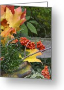 Bittersweet Photo Greeting Cards - My Bittersweet Fall Greeting Card by Mary Machare