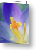 Decorativ Photo Greeting Cards - My crocus III Greeting Card by Angela Doelling AD DESIGN Photo and PhotoArt