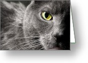 Head Of State Greeting Cards - My Eyes On You Greeting Card by Diana Lee Angstadt