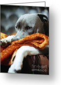 Lazy Dogs Greeting Cards - My Favourite Blanket Greeting Card by Angel  Tarantella