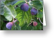Fig Tree Greeting Cards - My Fig Tree Greeting Card by Charlette Miller
