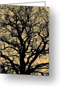 Licht Greeting Cards - My Friend - The Tree ... Greeting Card by Juergen Weiss