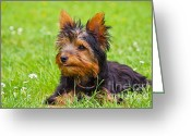 Pet Picture Greeting Cards - My little dog Greeting Card by Angela Doelling AD DESIGN Photo and PhotoArt
