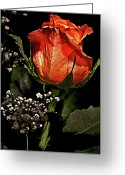 Award Winning Digital Art Greeting Cards - My Lovers Rose Greeting Card by David Kehrli