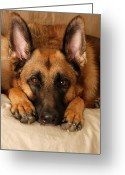 Pets Portraits Greeting Cards - My Loyal Friend Greeting Card by Angie McKenzie