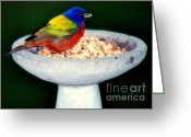 Baby Birds Greeting Cards - My Painted Bunting Greeting Card by Karen Wiles