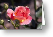 Designers Choice Photo Greeting Cards - My Rose Greeting Card by Don  Wright