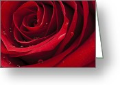 Red Woman Greeting Cards - My Rose Greeting Card by Ivan Vukelic