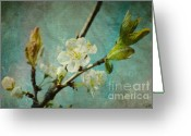 Blau Greeting Cards - My springtime Greeting Card by Angela Doelling AD DESIGN Photo and PhotoArt