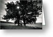 Landscape Photograpy Greeting Cards - My Trees Greeting Card by Gabi Fischer