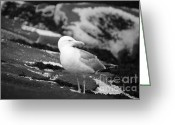 Nubble Greeting Cards - My Turf Greeting Card by Luke Moore