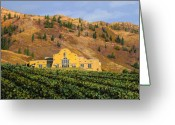 Vineyard Greeting Cards - Mypa Greeting Card by Guido Borelli