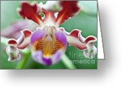 Red Orchid Blooms Greeting Cards - Myrmecophila tibicinis orchid Greeting Card by Heiko Koehrer-Wagner