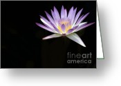 Water Gardens Greeting Cards - Mysterious Water Lily Greeting Card by Sabrina L Ryan