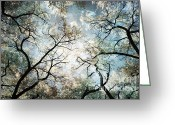 Albuquerque Greeting Cards - Mystic Forest Sky Greeting Card by Andrea Hazel Ihlefeld