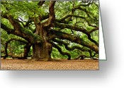 Old Tree Greeting Cards - Mystical Angel Oak Tree Greeting Card by Louis Dallara
