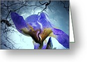 Pixie Spring Fantasy Greeting Cards - Mystique Greeting Card by Ken Young