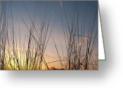 Prairie Native Greeting Cards - Nachusa Grasslands Sunset Greeting Card by Steve Gadomski