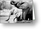 Africa Photo Greeting Cards - Namibia Elephants Greeting Card by Nina Papiorek