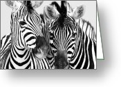 Africa Photo Greeting Cards - Namibia Zebras IV Greeting Card by Nina Papiorek