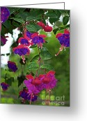 Plant Nursery Greeting Cards - Nans Fushia Greeting Card by Gwyn Newcombe