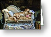 Couch Greeting Cards - Nap Time Greeting Card by Edward Sobuta