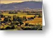 Fall Photographs Greeting Cards - Napa Glow Greeting Card by Mars Lasar