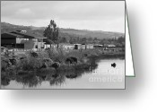 Tong River Greeting Cards - Napa River in Napa California Wine Country . Black and White Greeting Card by Wingsdomain Art and Photography