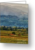 Fall Photographs Greeting Cards - Napa Valley Mist Greeting Card by Mars Lasar