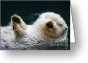Sea Greeting Cards - Napping on the Water Greeting Card by Mike  Dawson