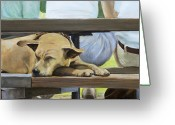 Bleachers Greeting Cards - Naptime in the Bleachers Greeting Card by Linda Tenukas