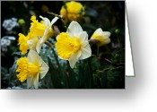 March Greeting Cards - Narcissus Las Vegas The Choir Greeting Card by Andee Photography