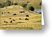 Great Plains Greeting Cards - National Bison Range Moiese MT Greeting Card by Christine Till