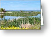 Southern Oregon Photo Greeting Cards - National wildlife preserve marshes in Klamath Falls Oregon. Greeting Card by Gino Rigucci