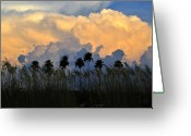 Oats Greeting Cards - Native Florida Greeting Card by David Lee Thompson