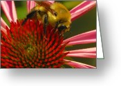 Bumble Greeting Cards - Natural Attractions  Greeting Card by Steven Milner