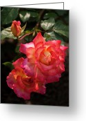 Designers Choice Photo Greeting Cards - Natural Beauties Greeting Card by Don  Wright
