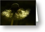 Backlit Greeting Cards - Natural Gold Greeting Card by Barbara  White