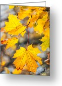 Calendar Greeting Cards - Natural Patchwork. Golden Mable Leaves Greeting Card by Jenny Rainbow
