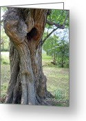 Tree Huggers Greeting Cards - Natural Tree Hugger Greeting Card by Joy Tudor