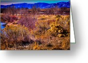 Flood Plain Greeting Cards - Nature at its best in South Platte Park Greeting Card by David Patterson
