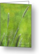 Pflanzen Greeting Cards - Nature Impression Greeting Card by Angela Doelling AD DESIGN Photo and PhotoArt