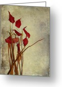 Red Photographs Greeting Cards - Nature Morte Du Moment Greeting Card by Aimelle