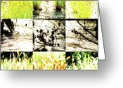 Robert C. Glover Jr Greeting Cards - Nature Scape 005 Greeting Card by Robert Glover