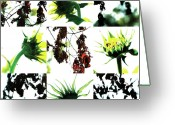 Robert C. Glover Jr Greeting Cards - Nature Scape 008 Greeting Card by Robert Glover