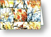 Robert C. Glover Jr Greeting Cards - Nature Scape 014 Greeting Card by Robert Glover