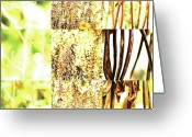 Robert C. Glover Jr Greeting Cards - Nature Scape 016 Greeting Card by Robert Glover