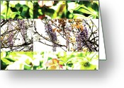 Robert C. Glover Jr Greeting Cards - Nature Scape 019 Greeting Card by Robert Glover