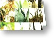 Robert C. Glover Jr Greeting Cards - Nature Scape 022 Greeting Card by Robert Glover